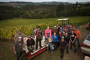Results partners crew, Alexana estate vineyard  harvest, Dundee Hills, Willamette Valley, Oregon