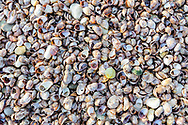 Seashells, Southold, NY