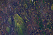 Grass and moss in a small river by Landmannalaugar