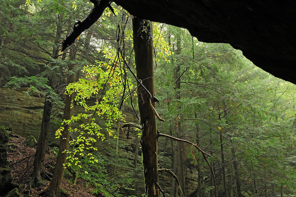 Pine Creek Gorge, Conkle's Hollow Nature Reserve, Ohio, USA