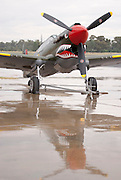 A Curtiss P40 Kittyhawk of the Temora Air Museum, formerly of the Royal Australian Air Force (RAAF) on display