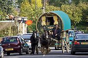 Cars overtake shire horse-drawn gypsy caravan on country lanes, Stow-On-The-Wold, Gloucestershire, United Kingdom