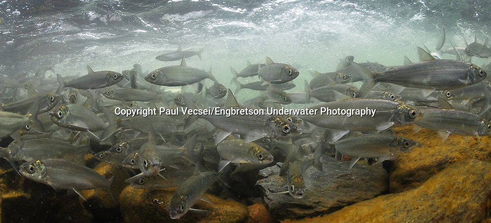 Cisco<br />