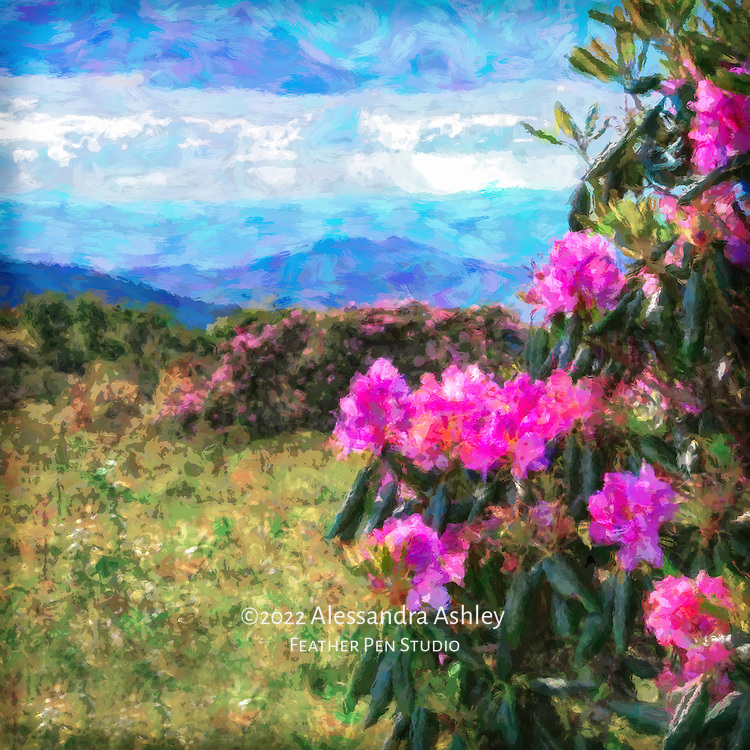 Pink rhododendron in late spring full bloom atop Asheville, North Carolina's Craggy Gardens Trail, with ridgelines of the Blue Ridge Mountains in the distance. Painted effects blended with original photo.