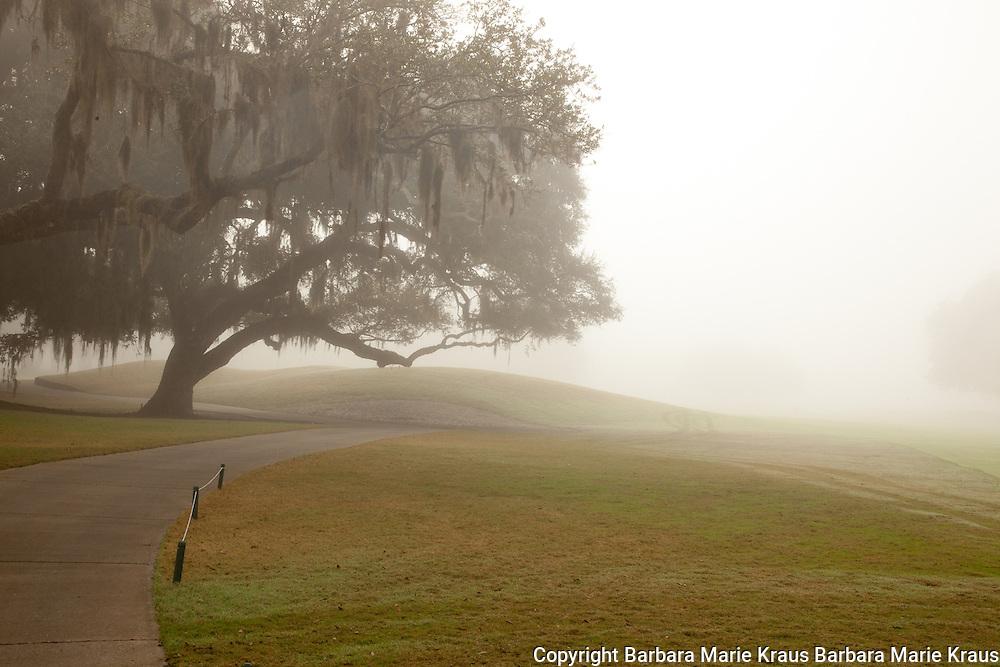 Misty morning on the fairways of the Plantation Course of the Sea Island Golf Resort on St. Simons Island, Georgia