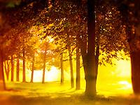 Lisa Johnston   lisa@aeternus.com   Tiwtter: @aeternusphoto  Morning sun in trees.