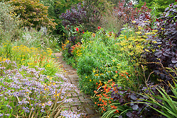 Brick path through the hot borders at Glebe Cottage. Dahlia 'Bishop of Llandaff', Rudbeckia fulgida var. deamii, Aster 'Little Carlow', crocosmias, fennel and Cotinus coggygria Purpureus Group