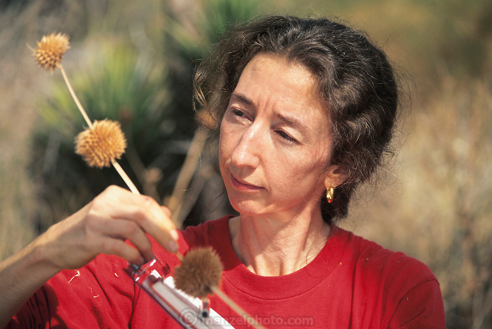 Biosphere 2 Project undertaken by Space Biosphere Ventures, a private ecological research firm funded by Edward P. Bass of Texas.  'Biospherian' Linda Leigh seen conducting a plant survey in the desert biome of the Biospere 2 project.  Biosphere 2 was a privately funded experiment, designed to investigate the way in which humans interact with a small self-sufficient ecological environment, and to look at possibilities for future planetary colonization. 1992