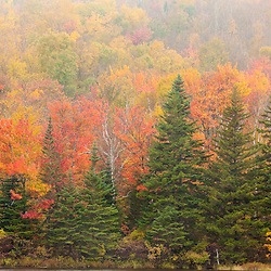 Fall colors on the shore of Zealand Pond. White Mountain National Forest, New Hampshire.