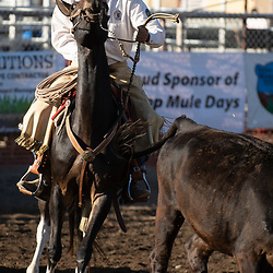 2018 Bishop Mule Days (selects)