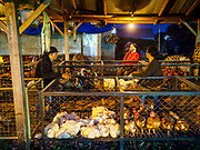 04 AUGUST 2017 - PAYANGAN, BALI, INDONESIA: Ducks and chickens for sale in the local market in Payangan, about 45 minutes from Ubud. Bali's local markets are open on an every three day rotating schedule because venders travel from town to town. Before modern refrigeration and convenience stores became common place on Bali, markets were thriving community gatherings. Fewer people shop at markets now as more and more consumers go to convenience stores and more families have refrigerators.      PHOTO BY JACK KURTZ