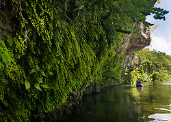 A kayaker passes by a fern-lined bluff on the North Fork of the White River.<br /> <br /> The North Fork of the White River, known locally as the North Fork River is a popular floating and fishing stream, known for its spring-fed water. The 109-mile-long river is a tributary of the White River.