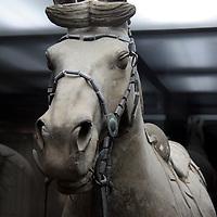Asia, China, Shaanxi, Xian. Terra Cotta warrior horse in museum of the Terra Cotta Warriors.