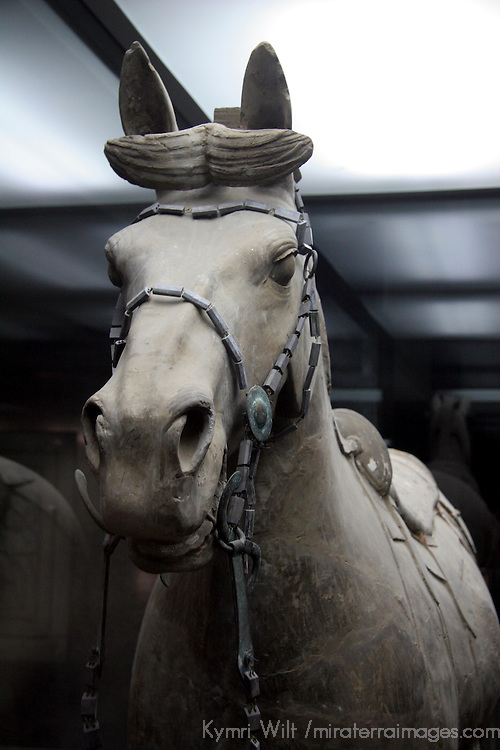 Asia, China, Shaanxi, Xian. Terra Cotta warrior horse in museum of the Terra Cotta Warriors.