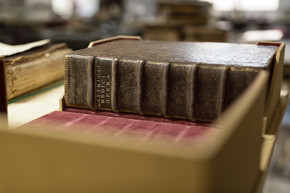 erbario mattioli XVI secolo<br /> <br /> herbarium Mattioli of XVI century