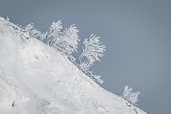 04.02.2019, Aare, SWE, FIS Weltmeisterschaften Ski Alpin, im Bild Verschneite Sträucher // Snow-covered shrubs during the course inspection for the 1st training run in the ladie's Downhill of the FIS Ski Alpine World Championships 2019 at the Aare, Sweden on 2019/02/04. EXPA Pictures © 2019, PhotoCredit: EXPA/ Johann Groder