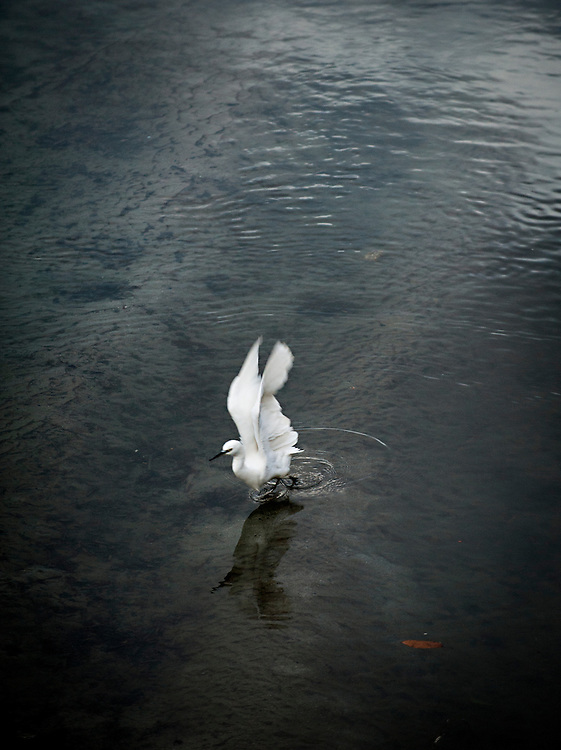 A bird lands on water in Kyoto, Japan.