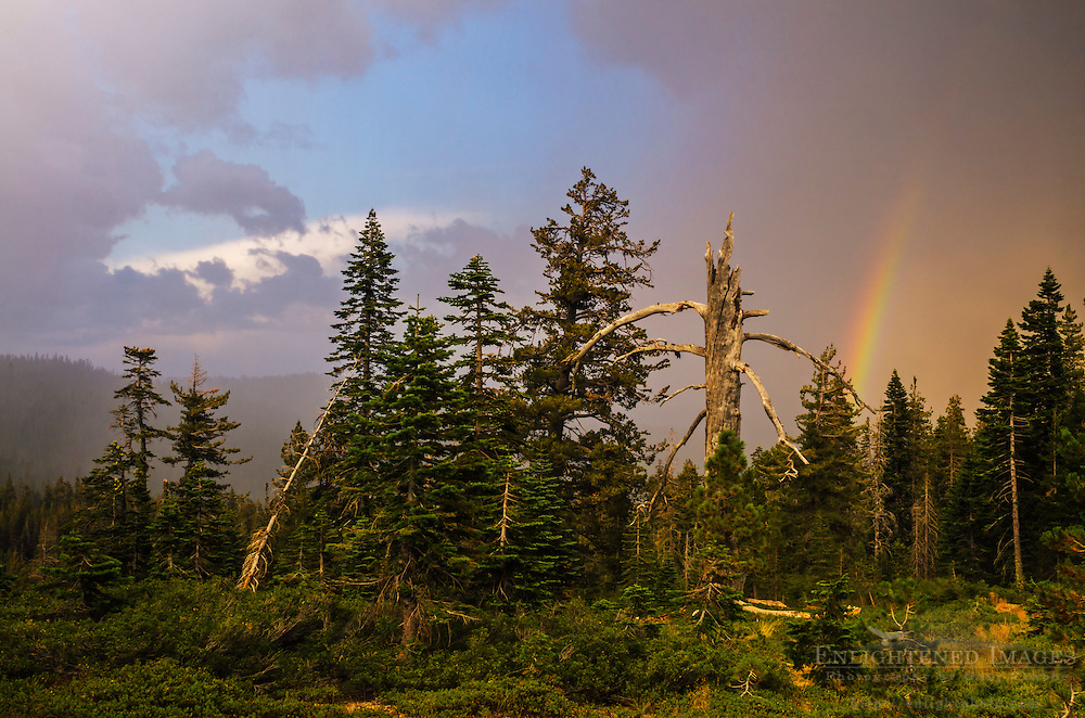 Rainbow and thunderstorm clouds, Tahoe National Forest, Sierra County, California