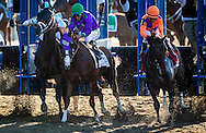 June 07, 2014: Matterhorn (3) collides with California Chrome and Victor Espinoza at the star of the Belmont Stakes at Belmont Park in Elmont New York. Alex Evers/ESW/CSM
