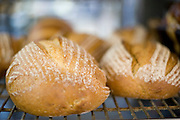 Fresh baked breads at Guglhupf Bakery in Durham, NC.