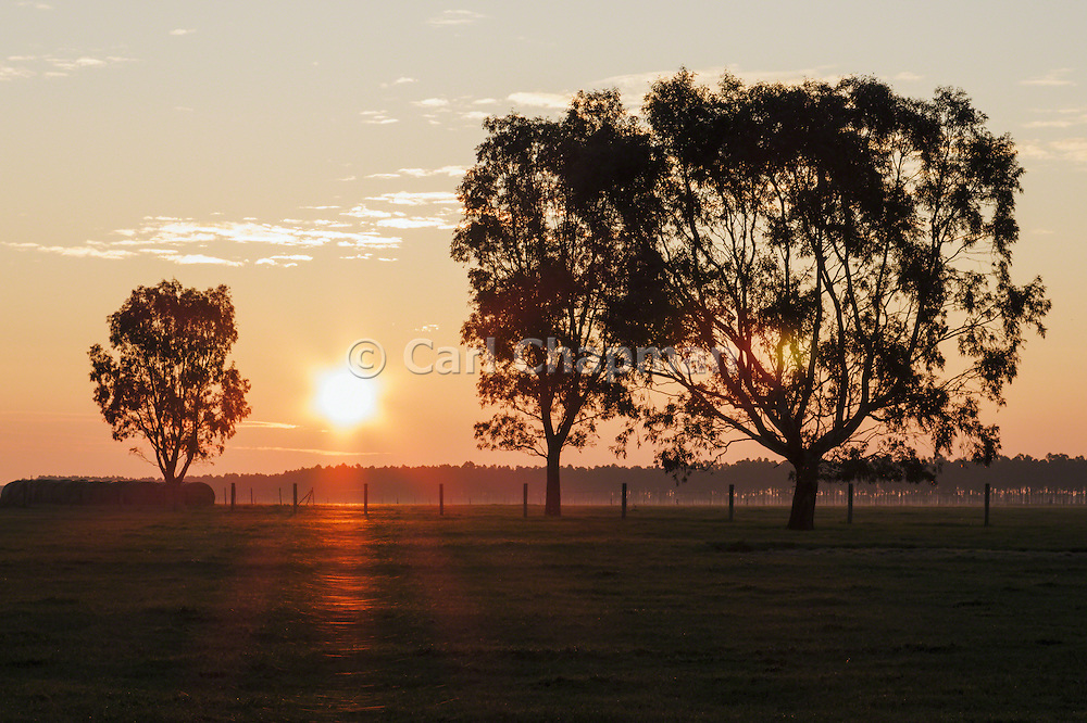 Rural sunset over a farm paddock between trees in Mingay, Victoria, Australia.