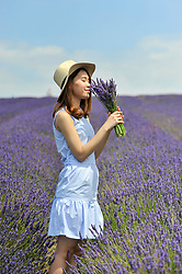 © Licensed to London News Pictures. 09/07/2017. Ickleford, UK. Vietnamese business student at Northampton University Phuong Nguyen visits Hitchin Lavender farm to view and pick lavender.  Currently in full bloom, the lavender attracts visitors from far and wide to this popular family run farm.  Photo credit : Stephen Chung/LNP