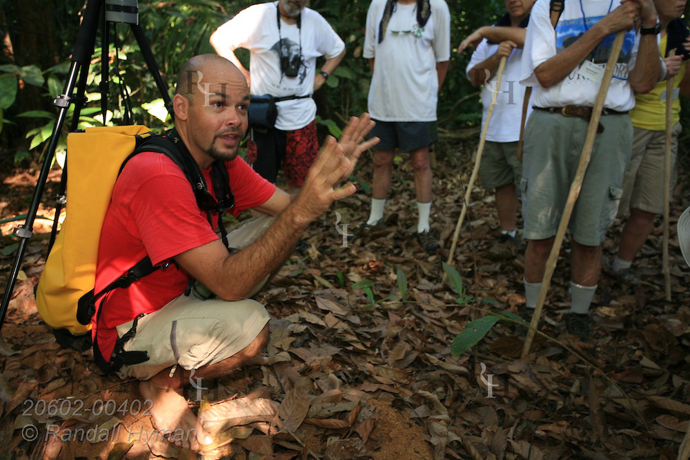 Guide lectures ecotourists as they stand by leafcutter ant colony in tropical rainforest of Corcovado Conservation Area, Osa Peninsula, Costa Rica.