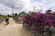 Taketomi-jima. Traditional houses and Bougainvillea.