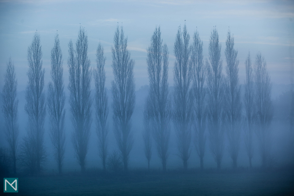 Trees seen through the mist in Watford