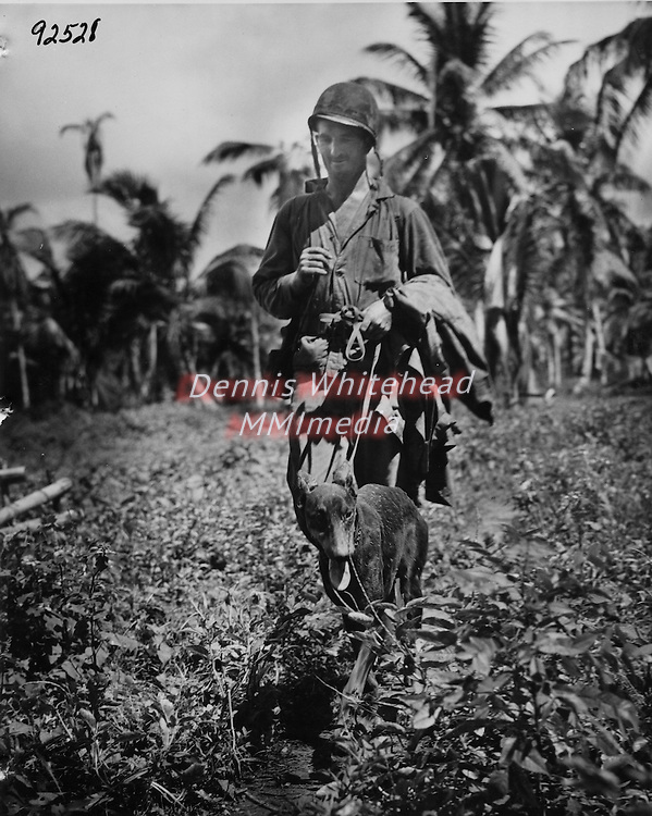 """Marine PFC Fred Voight and his Devil Dog """"Lucky"""" return to the dog contingent bivouac after several active patrols on the front lines on Guam. Lucky, a Doberman-Pinscher, formerly of Long Island, poited to a number of Japanese fighters during the day whom his partner promptly eliminated."""