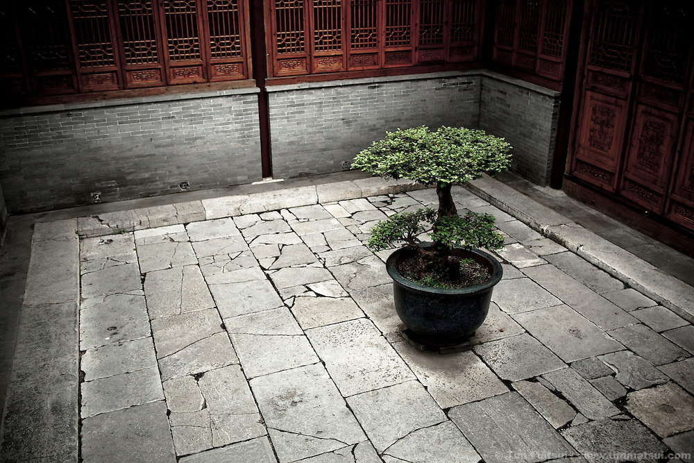 A lone tree stands in the courtyard of an historic residence now open to the public in Yangzhou, China, a suburb city of Shanghai and a major producer of photovoltaic cells for solar energy.