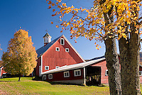 Classic red new England Barn with maple tree in autumn, Vermont USA