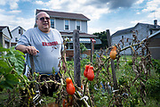 Frank Purraccio picks the last of the produce from his backyard garden in West Aliquippa, Pa.<br /> <br /> Frank and his father, Frank Purraccio Jr., tended this garden for 57 years. His father passed away earlier this year at the age of 90. <br /> <br /> Frank, who has stage 4 cancer, says it is just too hard to keep it going and this will be the last year for the garden.<br /> <br /> Purrachio, was a retired millwright from the J&L Steel Works, has lived in West Aliquippa all of his life with the exception of a few years in the Marine Corps. <br /> <br /> Aliquippa is the former location of a one of the largest steel mills in the world, the Jones and Laughlin Aliquippa Works occupied a seven mile stretch along the Ohio River. <br /> <br /> The city now has fewer residents than the steel mill had employees (14,000) in its heyday. By 1989, most of the production facilities were closed before shuttering for good in the early nineties.