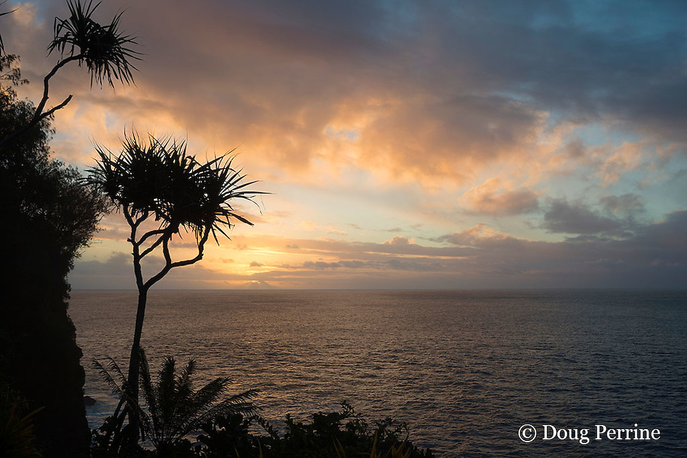 sunset over Pacific Ocean, with pandanus or lauhala tree in foreground, as seen from just above Ika Lahi Fishing Lodge, Hunga Island, Vava'u, Kingdom of Tonga, South Pacific
