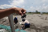 Personas recatan tortuga en la área afectada donde cinco mil doscientos huevos de tortuga fueron destruidos en la Peninsula de San Juan del Gozo, Usultan despues de un fuerte oleaje provocado por el terremoto provocado 120 km mar a dentro. Centenares de tortugeross fueron sorpredidos por el f uerte oleaje. Foto: Franklin Rivera/fmln/imagenes Libres.
