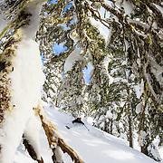 Owen Dudley tasts some deep winter powder in the backcountry near Mount Baker Ski Area.