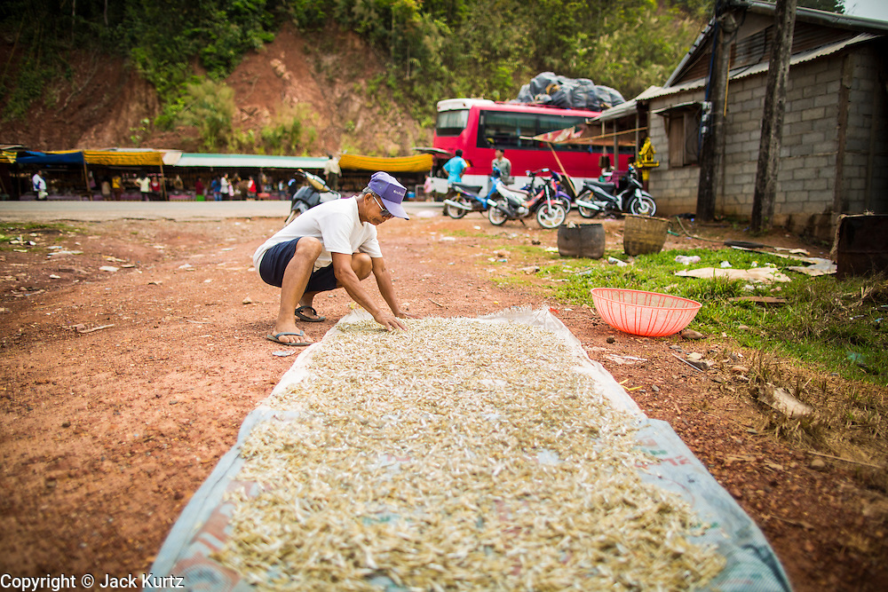 """09 MARCH 2013 - ALONG HIGHWAY 13, LAOS: A man sets out """"pla noi"""" (literally """"small fish"""") to dry in the sun at a rest stop on Highway 13. Hmong hilltribe people have set up a market at the stop. The paving of Highway 13 from Vientiane to near the Chinese border has changed the way of life in rural Laos. Villagers near Luang Prabang used to have to take unreliable boats that took three hours round trip to get from the homes to the tourist center of Luang Prabang, now they take a 40 minute round trip bus ride. North of Luang Prabang, paving the highway has been an opportunity for China to use Laos as a transshipping point. Chinese merchandise now goes through Laos to Thailand where it's put on Thai trains and taken to the deep water port east of Bangkok. The Chinese have also expanded their economic empire into Laos. Chinese hotels and businesses are common in northern Laos and in some cities, like Oudomxay, are now up to 40% percent. As the roads are paved, more people move away from their traditional homes in the mountains of Laos and crowd the side of the road living off tourists' and truck drivers.    PHOTO BY JACK KURTZ"""