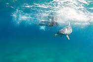 Circle swimming is a favourite game played between human and dolphin with the dolphin oftentimes jostling for prime position in the eye-contact-circle-swim dance