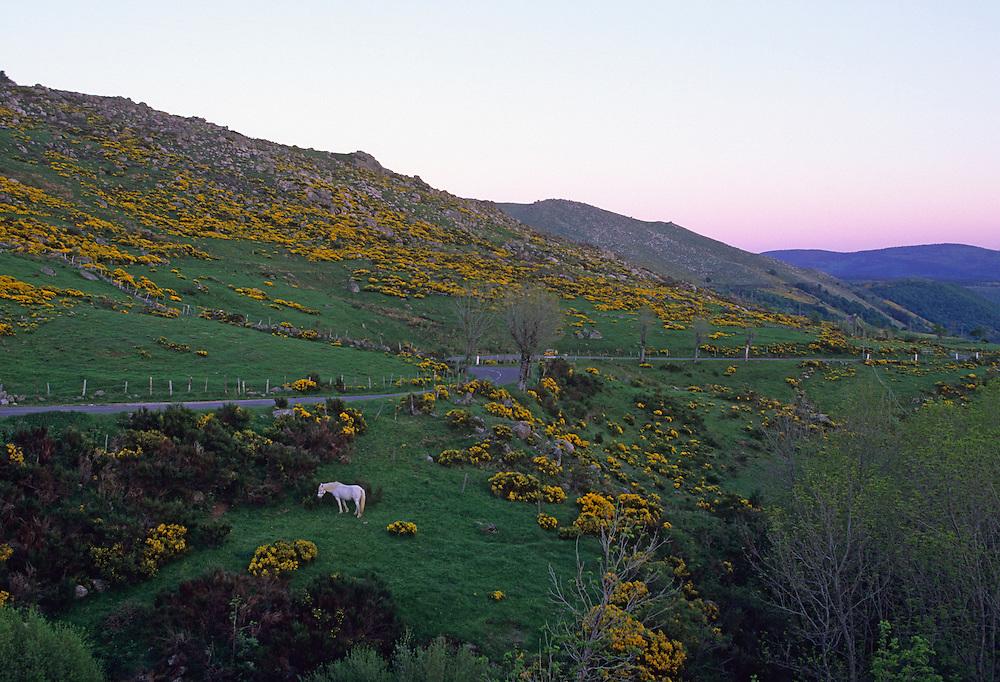 France, Languedoc Rousillon,Lozère, Cevennes, Mont Lozère, route du col de Finiels