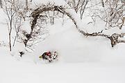 Alex Yoder in deep and under a tree in TT Gully. Niseko, Hokkaido Japan backcountry.