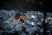 Aquidauana_MS, 03 de julho de 2008.<br /> <br /> Fazenda Rio Negro, Pantanal matogrossense.<br /> <br /> Foto: JOAO MARCOS ROSA / AGENCIA NITRO