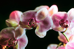 Tight Orchid Detail Highlights Profound This Floral Photograph