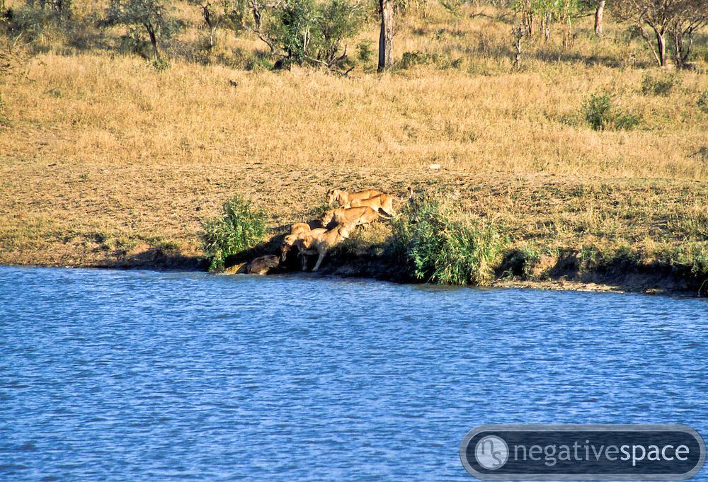 Battle at Kruger No. 10