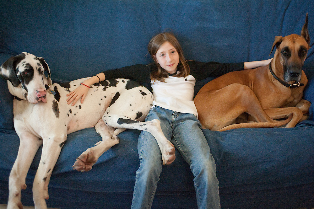 Girl in between two Great Dane dogs