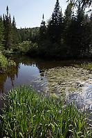 Connecticut River Below Moose Falls, Pittsburg, NH