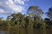 Cuiaba River<br /> Pantanal, Brazil
