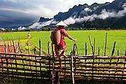 A rice farmer at Tham Lot Khong Lo, Laos.