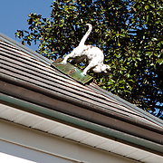Live Oak Stud located in Ocala, Florida, USA.