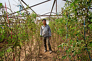 One of the village elders inside his poly tunnel that was built a previous ICS/Raleigh group in Kaudi, Nepal. (Photo by Andy Aitchison/ICS)