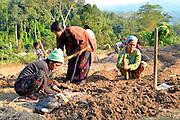 Kachin refugee housewives ai Je Yang Hka near China Myanmar boarder Lai Za, Refugee housewives growing potatoe at Refugee farm.